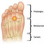 Anatomía del pie. Partes del pie